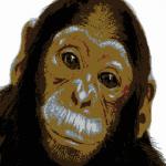 Äffchen [Monkey]