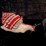 Candycane Snail