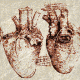 Art-DV-Cardiac Anatomy
