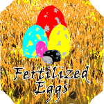 Fertilized Eggs