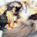 LuZymax cat